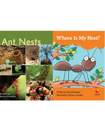Ant Nests / Where Is My Nest?
