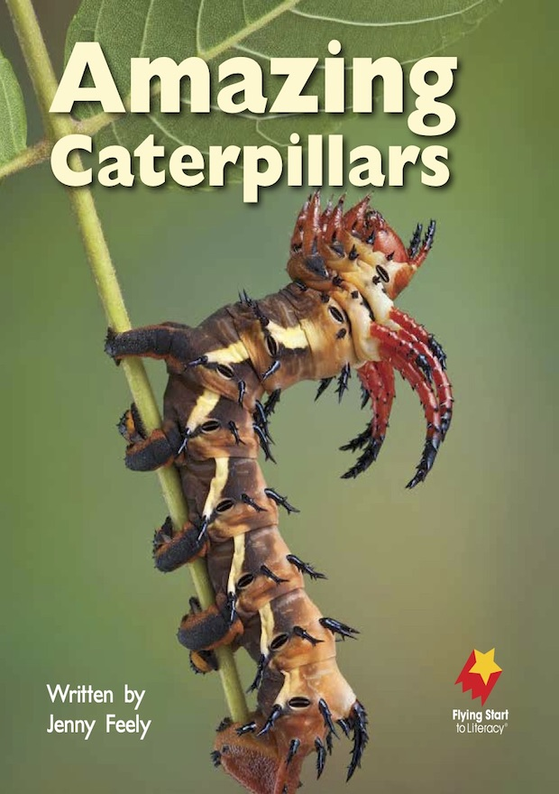 Amazing Caterpillars