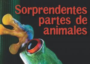 Sorprendentes partes de animales