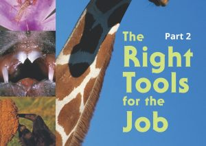 The Right Tools for the Job Part 2