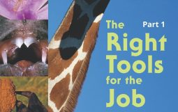 The Right Tools for the Job Part 1